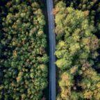 Deep Learning für den Wald