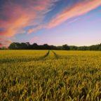 KI in der Landwirtschaft